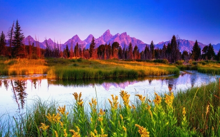 Summer Sunrise At Teton National Park - water, river, trees, wyoming, usa, flowers