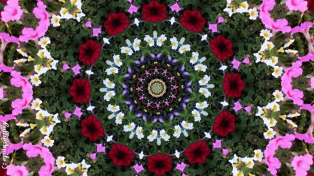 Petunia Garden Abstract - petunias, kaleidoscopes too1, kaleidoscope, red, green, pink, white