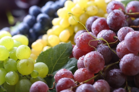 Grapes - struguri, grapes, fruit, autumn, toamna, yellow