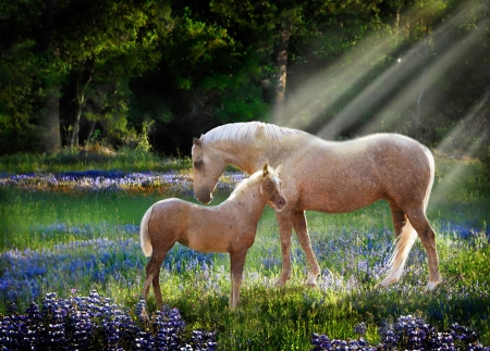 Serenity - flowers, nature, sunrays, foal