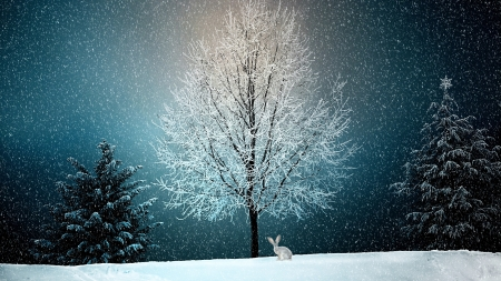 Winter - rabbit, tree, white, rodent, iarna, animal, blue, winter, bunny
