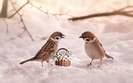 Sparrows - nature, Sparrow, snow, bird