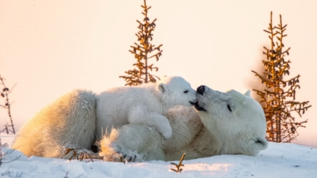 Polar bear - bear, nature, snow, Polar