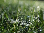 Spiderweb in Grass