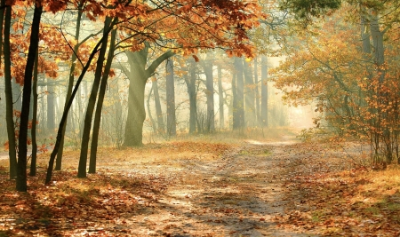 Sun Kissed Autumn Pathway - Forest, autumn, Trees, leaves, path, Peaceful, Sun rays, Fall, lovely, splender