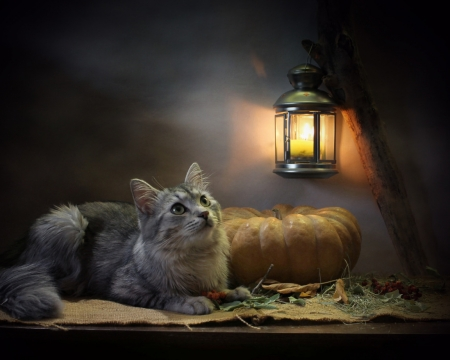 Cute Cat - pet, lamp, cat, animal