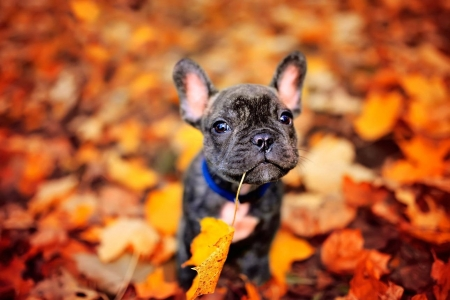 :) - autumn, orange, toamna, leaf, dog, puppy, red, caine, cute, funny