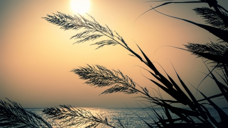 Grass Fronds - Sea, Sky, Grass, Sun