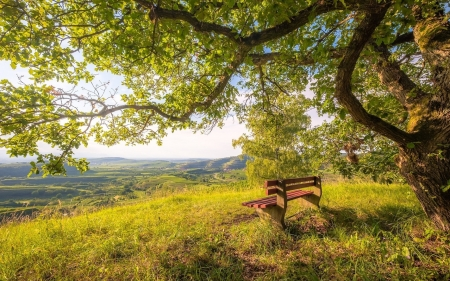 Bench under Tree - bench, Germany, trees, hill