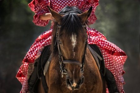 The red little riding hood - horse, saddle, ride, photography, freedom, animal