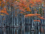 Georgia Cypress Swamp