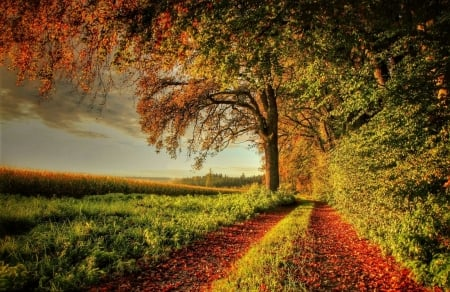 autumn in the countryside - dirt road, countryside, tree, autumn