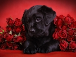 Sweet dog with roses