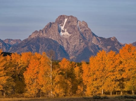 Fall fireworks beneath the Tetons - trees, usa, wyoming, leaves, colors, sky