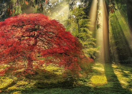 Magic Forest - colors, leaves, sunrays, trees