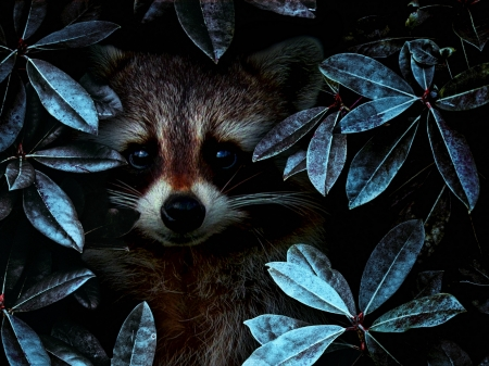 raccoon - forest, leaves, raccoon, animal