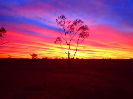Waking up to a burning Sky in the Australian Outback - tree, sunrise, clouds, colors, morning, landscape