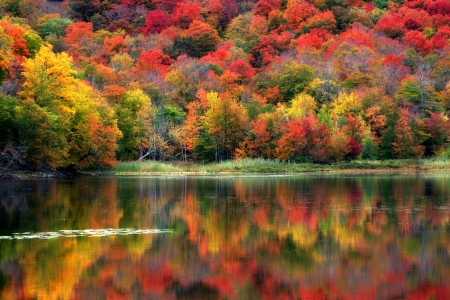 Autumn Reflection from Quebec, Canada - forest, water, autumn, reflection