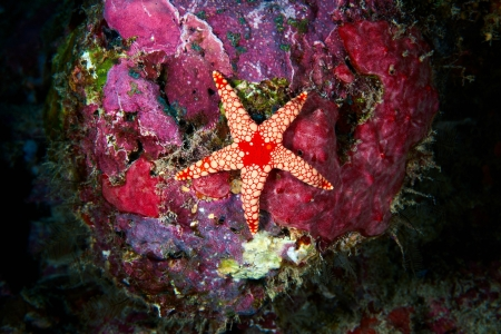 Starfish on a Coral Reef - water, coral, nature, starfish