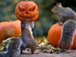 Squirrel's Halloween