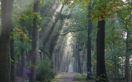 Forest Path - sunbeams, path, forest, trees