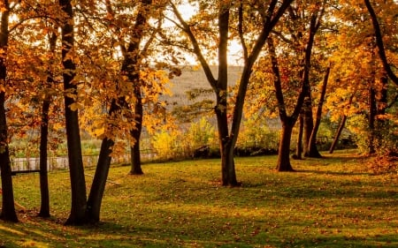 Autumn in America - nature, America, autumn, trees