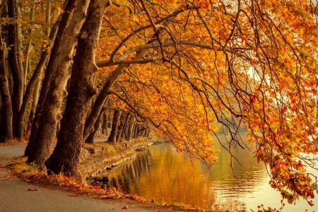 Autumn branches - forest, colorful, fall, autumn, orange, beautiful, park, foliage, lake, pond, tree, serenity, walk, river