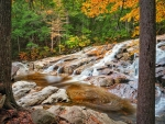 Cascade Brook, White Mountains, New Hampsire