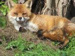 Foxy Chill-Out Zone