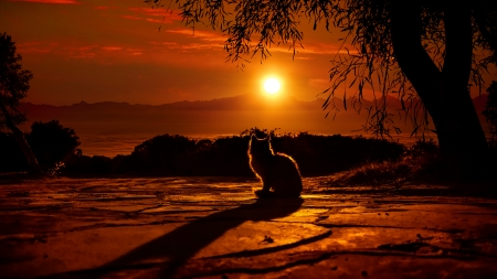 Cat watching sunset - sunset, horizon, kitten, cat, sky