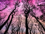 Silhouette Sunset Trees