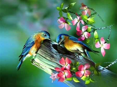 Sweet Birds in Spring - flowers, colorful, birds, Spring