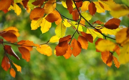 Autumn Leaves - yellow, autumn, leaves, orange