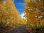 Birch Forest Road