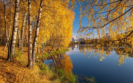 River in Russia - birches, autumn, river, Russia, houses