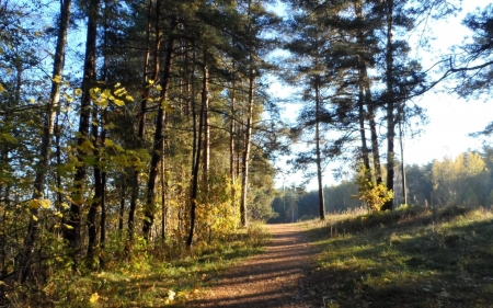 Forest Path - Latvia, path, forest, trees