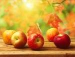 Apples in Autumn
