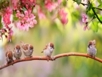 Little cute sparrows family