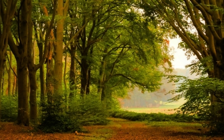 Forest in Netherlands - path, forest, trees, Netherlands