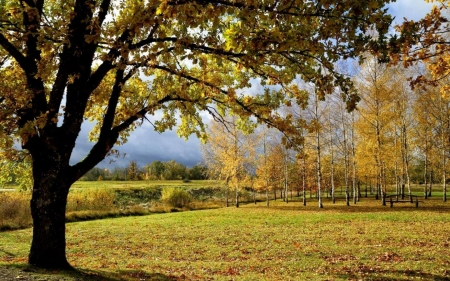 Autumn in Latvia - birches, Latvia, autumn, trees, fields