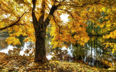 Tree by Pond - pond, park, tree, Russia, autumn