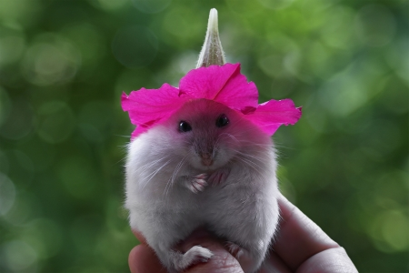 My New Hat - photograph, pink, hat, mouse