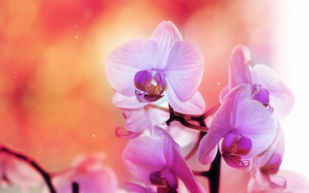 Beautiful Flowers - flowers, orchids, nature, blooms