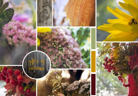 Gift of Autumn - flowers, petals, nature, blooms