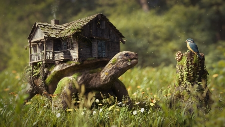 fantasy art works - house, turtle, grass, bird, moss, stump