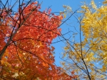 Autumn's Primary Colors VI