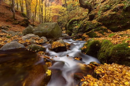 October - fall, forest, leaves, autumn, creek, beautiful, october, foliage, trees