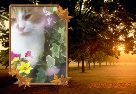 Cat in autumn - cute, autumn, cats, sweet