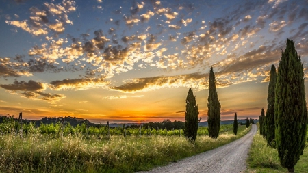 Into the Sunset - tranquil, path, sunset, clouds, road, trees, sky, field, Firefox theme