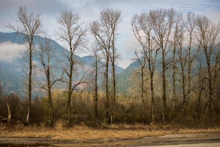 Row of tall trees - rural, forest, pretty, remote, HD, nature, trees, tall
